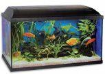 Akvarisztika - akvárium tulajdonosok keresik